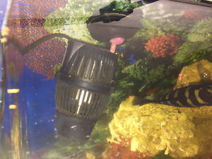 72 gallon bow front tank and cichlids Cambridge Kitchener Area image 8