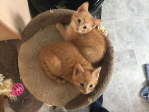 3 kittens need good homes free