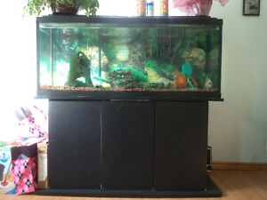 75 Gallon fish tank and accesories