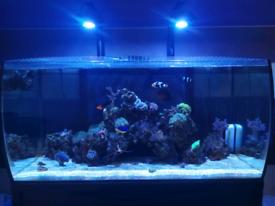 Fluval marine fish tank