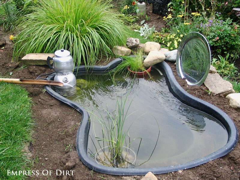 Let The Water Circulate For A Few Weeks Before Adding Pond Fish