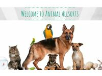 Animal Allsorts - A fun and energetic pet carer available in the Bromsgrove/Droitwich/Redditch area