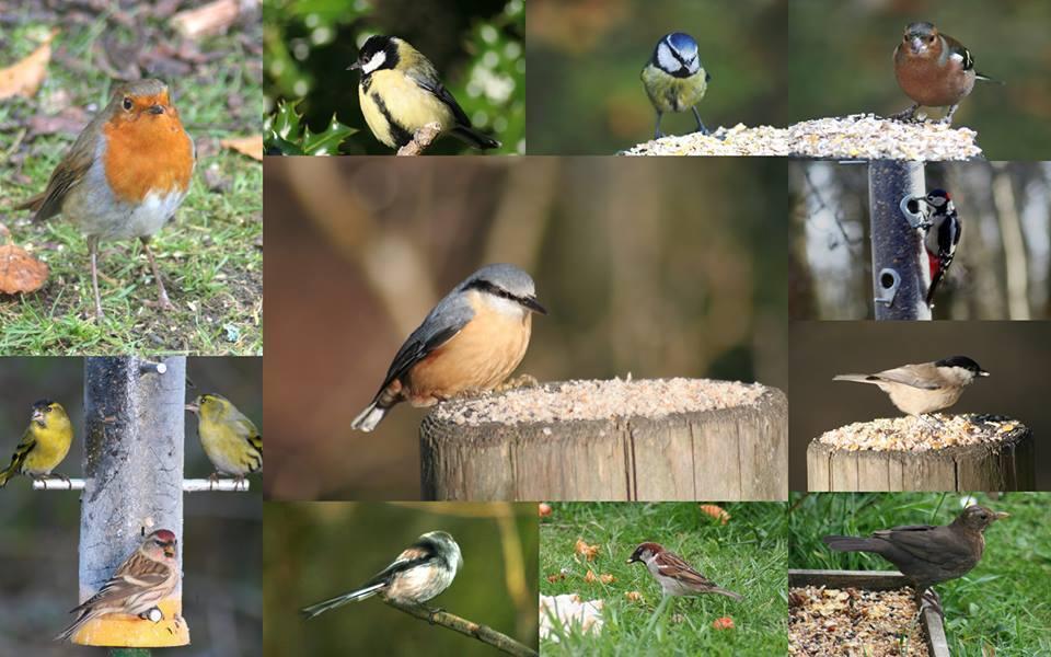 Nutbags garden bird foods