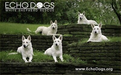 Echo Dogs White Shepherd Rescue, Inc.
