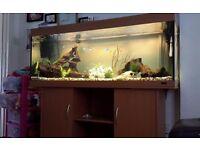 Juwel 500l fish tank aquarium full setup