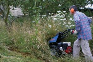 Overgrown grass cutting cutting