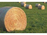 Barn stored organic and inorganic hay