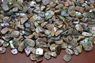 300  Pcs Abalone Sea Shell Charm Chips Beads 1 2 Lb  T 1089