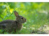 Rabbit to sale