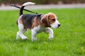 Helping Hands Dog Walking