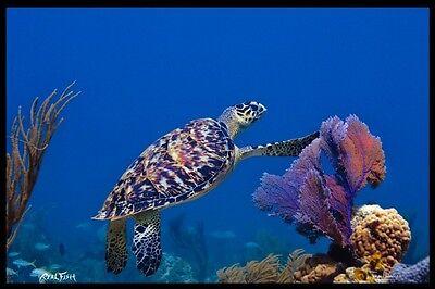 "Realfish H20 Series "" Turtle in Coral  "" Turtle Fish Mat Floor Mat Doormat 24x36"