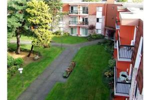 Furnished 1 Bedroom Apartment For Rent in Richmond BC