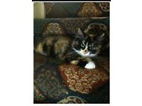 13 week old kitten