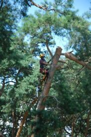 Tree surgeon Tree Surgery Rope access services window cleaning painting.