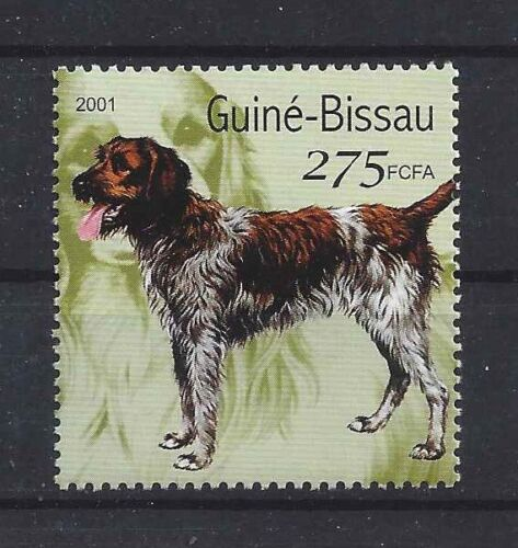 Dog Art Postage Stamp GERMAN WIREHAIRED POINTER POINTING GRIFFON Guinea MNH