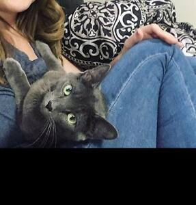 Missing 1 year old neutered & chipped male cat/SUMMERSIDE