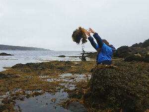 SEAWEED, great for the garden!