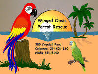 Winged Oasis Parrot Rescue