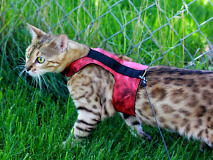 Custom Cat Harnesses!! Edmonton Edmonton Area image 8