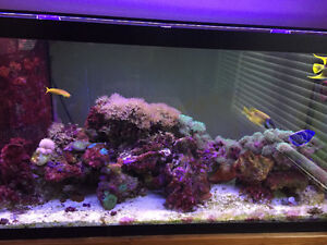 Salt Water Aquarium 90 gallon overflow tank with Equipment