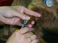 Fundraising Nail Clipping Service, May 8th 11am - 4pm