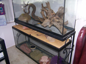 X-Large Reptile Aquarium, Tanks + Rack