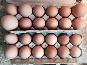 Farm Fresh Free Range Brown Eggs for Sale