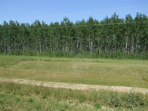 **New Price**  RM of Big River - 30 Acres