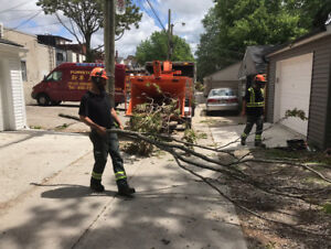 Labourer wanted for outdoor work with Tree Removal Company