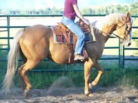 Registered 2008 Palomino mare from Oklahoma