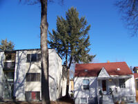 """""""Year round tree care"""" Serving  Penticton  to Osoyoos"""