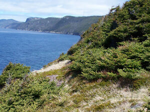 221ft Ocean Frontage Lot with Privacy & Panoramic Ocean Views St. John's Newfoundland image 5