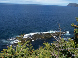 221ft Ocean Frontage Lot with Privacy & Panoramic Ocean Views St. John's Newfoundland image 8