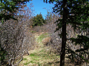 221ft Ocean Frontage Lot with Privacy & Panoramic Ocean Views St. John's Newfoundland image 7