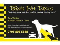 Tara's Pet Taxis (pet transportation)