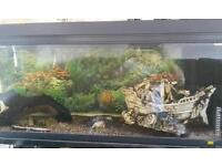 Fish tanks with ornaments and lots extra pump (need gone today )