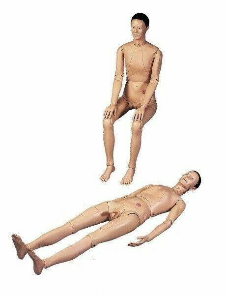 Manikin Anatomical Human Model For Education Teaching