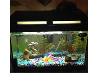 Tropical fish tank & stand