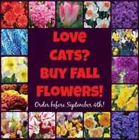 Cat rescue fundraiser: mums and spring bulbs