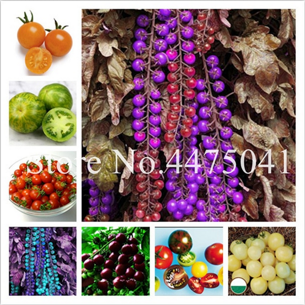 Seeds Cherry Tomato Vegetable Black Pearl Bonsai Home Garden Plants 200Pcs