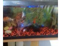 fish tank with 10 fish
