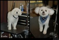 BEST Dog Grooming in Newmarket