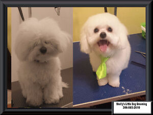 Shelly's Little Dog Grooming Regina Regina Area image 8