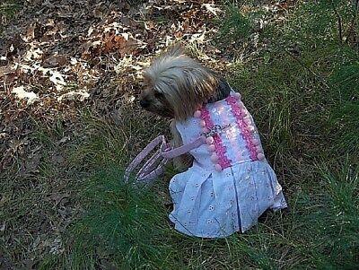 Dog Clothes Girls  Pink Harness Dress w/ 4' Matching Leash XXS XS -