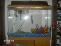 2 fish tanks with fish