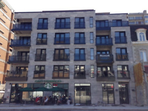 New Fully-Furnished Apartment Downtown Roommate Wanted