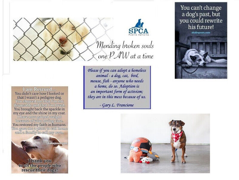 PVCA Animal Rescue Society Adoptable dogs | Dogs & Puppies