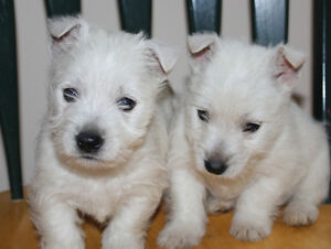 Our active healthy happy puppies are ready now