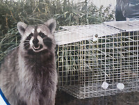 Live animal Cage Rental/Trap and release