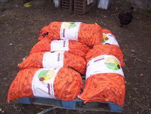 Livestock Carrots